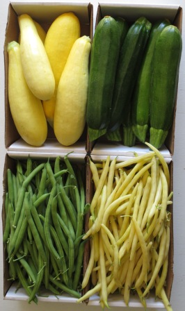Squash and Beans